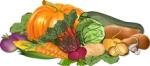 Harvest-vegetables